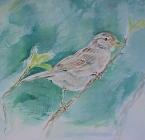 Hous Sparrow / Passer Domesticus