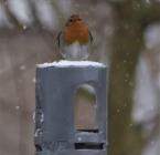 Takeaway voor vogels
