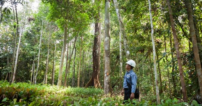 FSC pleit voor meer gebruik tropisch hout