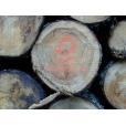 Tool geeft inzicht in impact FSC-hout